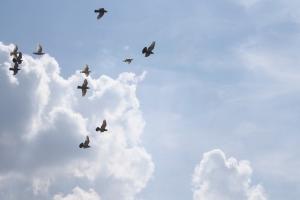 Free birds in flight - by Ronny Jansen